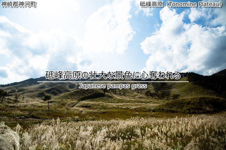 兵庫でもススキを楽しめる!砥峰高原の壮大な景色に心奪われる